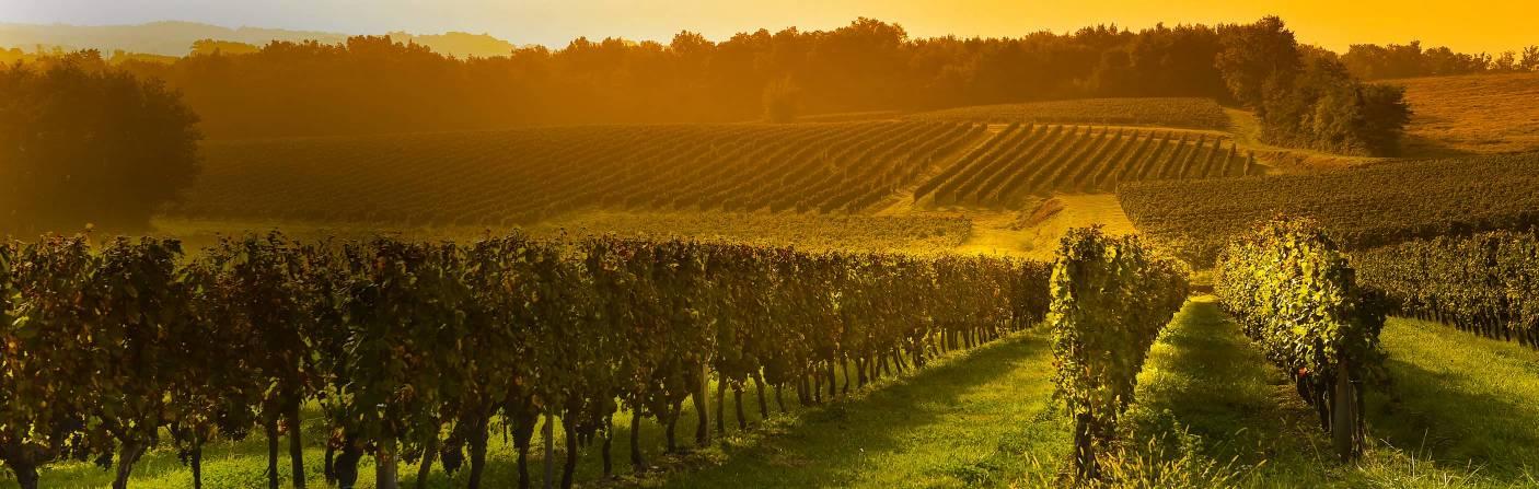 Wine - For enjoyable moments